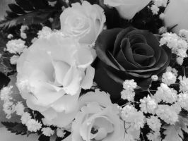 Rose in black and white two by DanicaWish