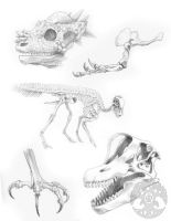 Animal Anatomy sketches - 1 by KatieHofgard
