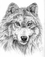 wolf graphite by simplelines