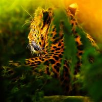 Leopard in Jungle by megaossa