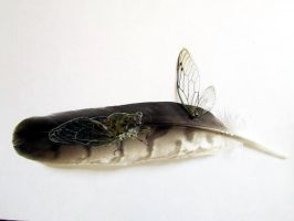 Painted Feather: Cicada by JewishPeril