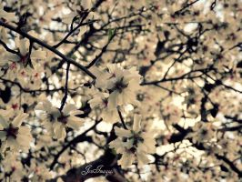 Flowers19. by PalomaJRos