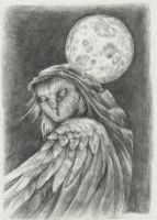 lady owl by queenofeagles