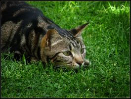 Lurking in the grass by kanes