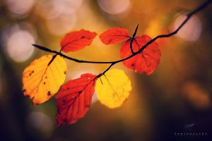 Colors Of Autumn by DREAMCA7CHER