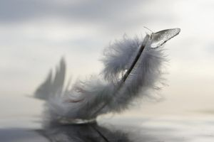 The Feather from God's Book by ahermin