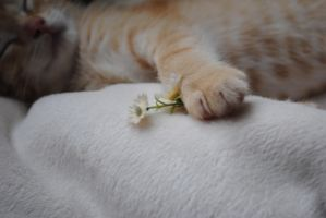The Kitten with Flowers by marlirae