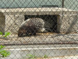 Porcupine by EricaD218