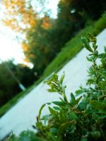 Nature - Pic 09 by nmoreKharon