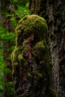 Treestump by ChristophMaier
