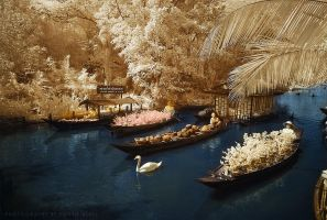 Floating Market IR by UG3