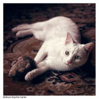 Kittie Cat by GillianLunae