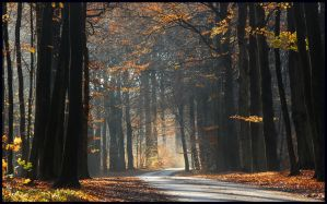 Going round the autumn bend by jchanders