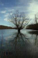 Submerged Tree by DionysosBacchus
