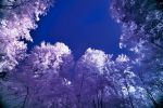 IR - Forest - FREMONTIERS by pohlmannmark