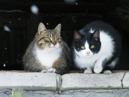 My cats by TRROL-SJS
