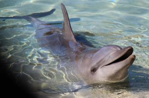 adorable dolphin by talentwithin