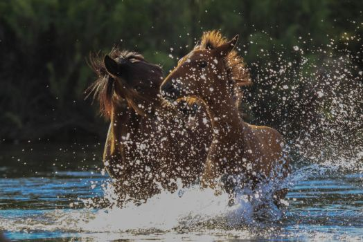Playtime on the River by dlitefulimagez