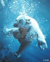 Polar After the Plunge by lisaackerman