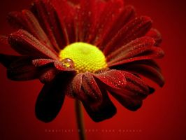 Flowers 25 by eyadness