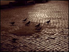 Pigeon Race by caminopalmero