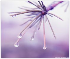 winter water droplets 4 by Sophie-Y