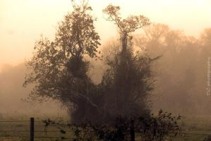 Foggy and eerie by TlCphotography730