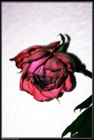 withered love 1 by avaladez