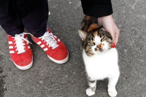 catsshoes by diostyos