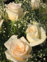 Roses blanches by talline-occrerou