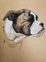 Bulldog Puppy by aaronprovost