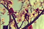 Spring by rbogas