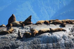 Sea Lions by athenaowl1999