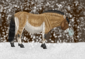 Asian Wild Horse-COMPLETE by patchesofheaven74