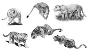 Cat Gestures - Daily Practice by Olooriel