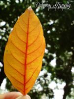 Yellow Leaf by PMinelly