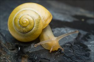Slimy Snail by FrederikM