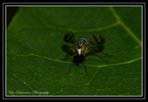 Long Legged Fly by DesignKReations