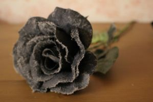 Black Rose (Dusty) STOCK by JaayAnon