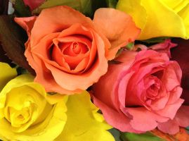 Colour of Roses by GraceDoragon