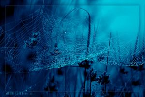 silent catch by werol