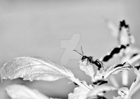 Ants 2 by carsonblack