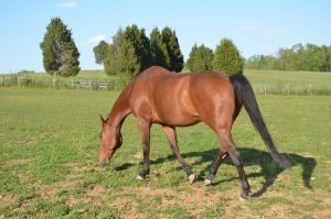 warmblood1 by Spotstock