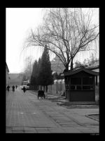 Cold day in Beijing by mercyop
