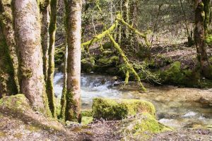 nature and moss by ingeline-art
