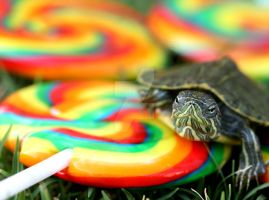 A turtle in candy land by Fatima-AlKuwari