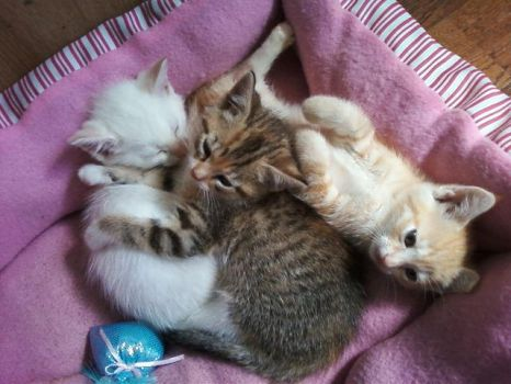 My new kittens by RoboHamsterz
