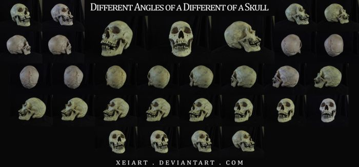 Different Angles of a Skull 2 by XeiArt