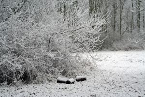 winterland 13 by priesteres-stock