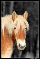 Lovely Horse by Emilie25